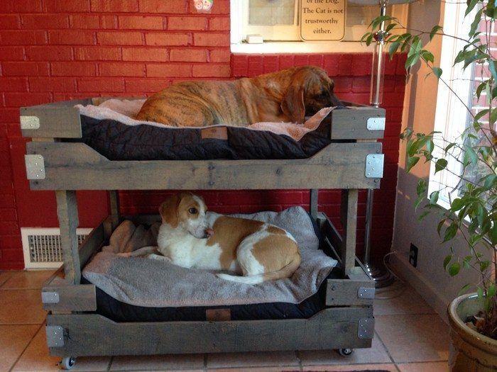 Dog pallet bunk beds