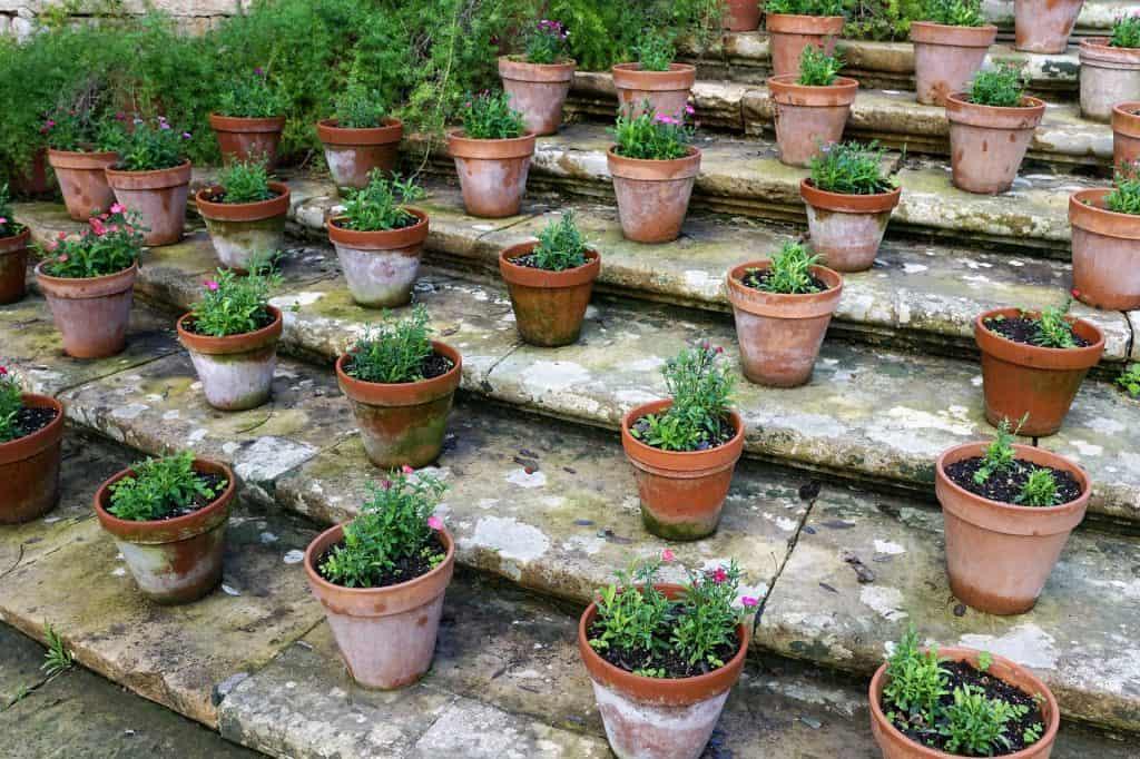 Plants in ceramic pots